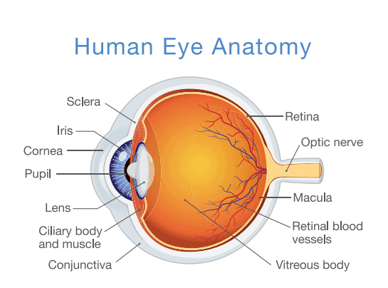 Retina disease detection, prevention and treatment in West Palm Beach